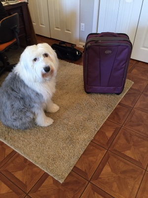 Molly doesn't seem to be as happy as I am with my new suitcase.